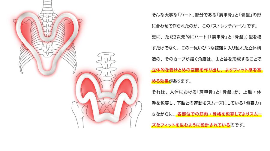 筋肉と骨盤を包容